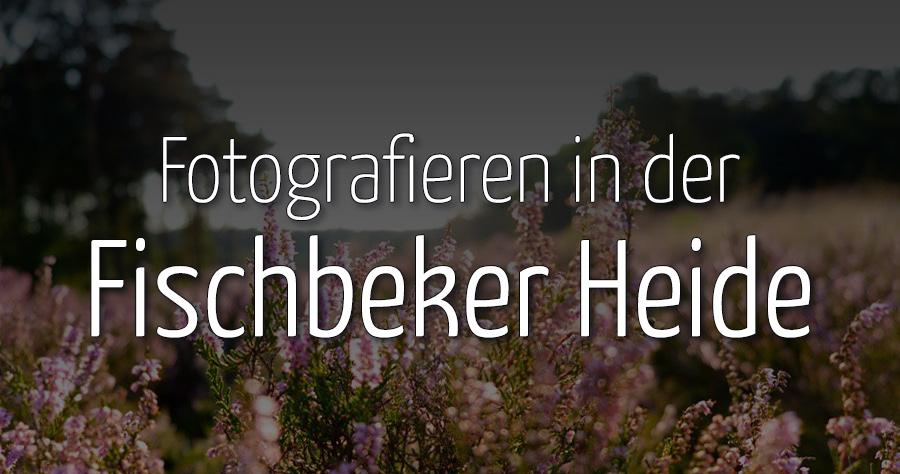 Fotografieren in der Fischbeker Heide